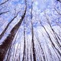 Photos: 林に佇む物語