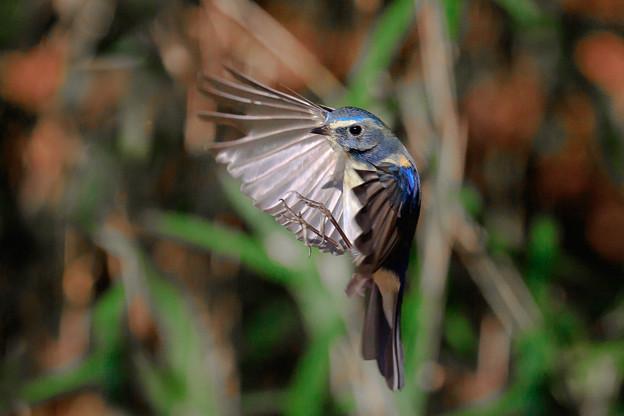 小鳥に魅了され 3