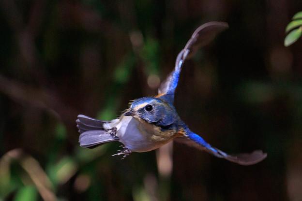 小鳥に魅了され 2