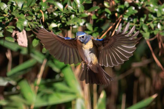小鳥に魅了され 1