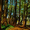 写真: メタセコイアの林