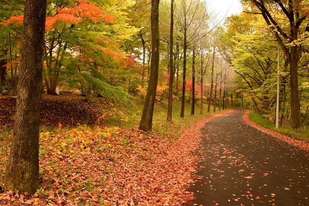 写真: 紅葉の道