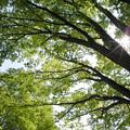 写真: 新緑を見上げる3
