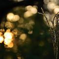 写真: 秋の夕日