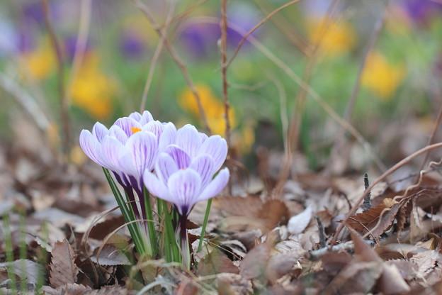 ゆるやかな春の風