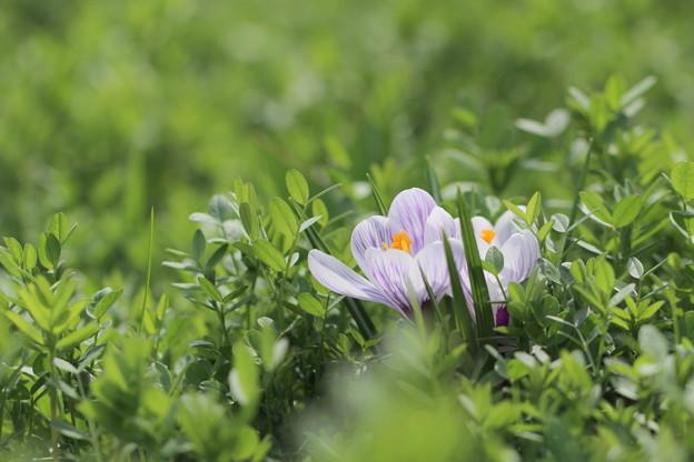 草原に春の唄