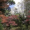Photos: 2010京都植物園秋07