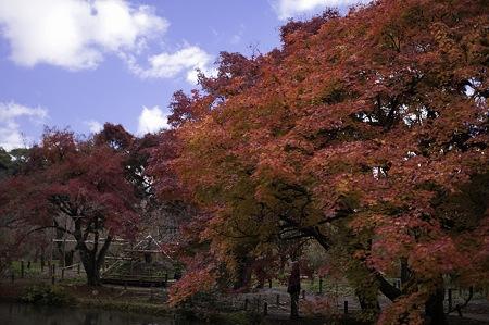 2010京都植物園秋23