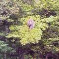 人を無視し懸命に食べてる猿さん