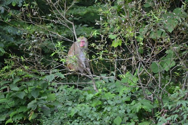 写真: サルは木の上に