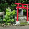 淡島の大諏訪宮