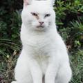 香貫山のネコ