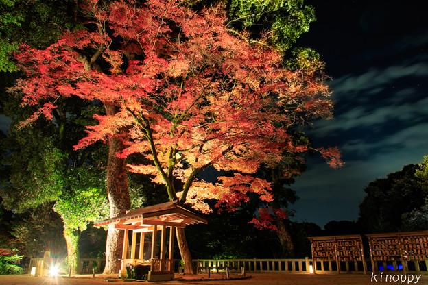 Photos: 宝満宮竈門神社 紅葉ライトアップ 2