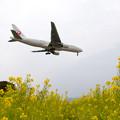 飛行機と菜の花