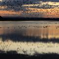 Photos: 空埋める雁の影を映して