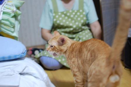 2010年8月7日の茶トラのボクチン(6歳)