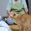 写真: 2010年8月7日の茶トラのボクチン(6歳)