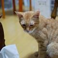 写真: 2010年8月10日のボクチン(6歳)