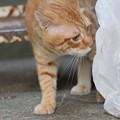 Photos: 2010年9月1日のボクチン(6歳)