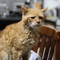 写真: 2012年9月5日のボクチン(8歳)
