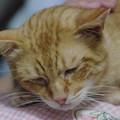 写真: 2009年9月25日のボクチン(5歳)