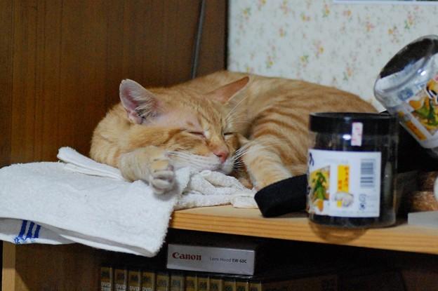 写真: 2010年9月27日の茶トラのボクちん(6歳)