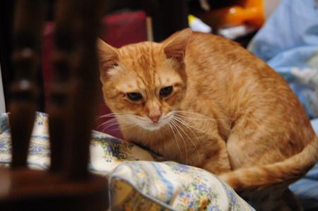 2009年10月11日の茶トラのボクちん(5歳)