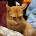 写真: 2009年10月11日のボクチン(5歳)