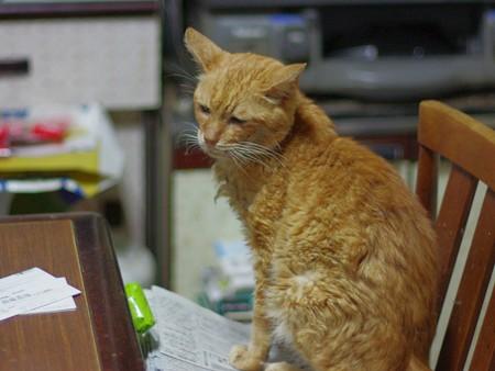 2011年10月15日の体調を崩して4ケ月半になる茶トラのボクチン(8歳)