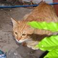 写真: 2008年10月27日のボクチン(4歳)