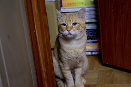 2010年10月27日の茶トラのボクちん(6歳)