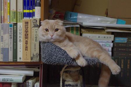 2016年5月28日のスコちゃん(雄3歳)