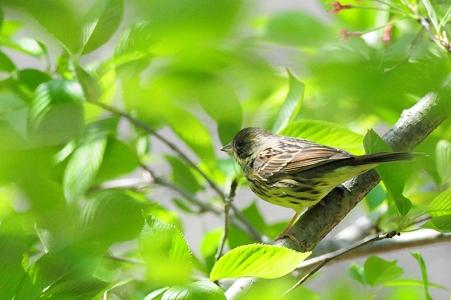 名前を調査中の鳥