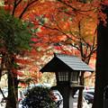 写真: 紅葉と灯籠