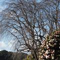 写真: 眠りについた枝達