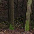 写真: 夜須物部線の県道から下に苔むした倒木を眺める