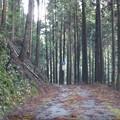 写真: 夜須物部線の県道