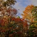紅葉の散歩道・秋の匂いを感じた