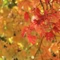 まだまだ紅葉が^^赤く輝いて