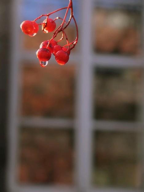 写真: 窓辺で君を想う初冬
