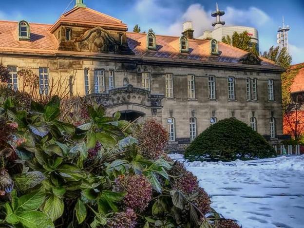 写真: 訴訟院の冬アジサイ