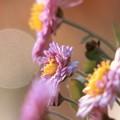 写真: ピンクの小菊と12月のスパームーン