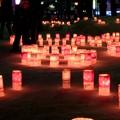 写真: ゆきあかりin中島公園~桜色に染まって~♪