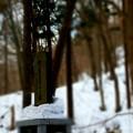 原始林の慰霊碑~何か写っとらんかなぁ~(◎-◎;)