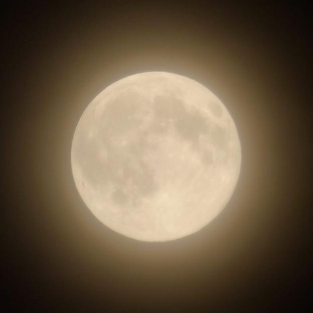 写真: 夏にも「おぼろ月」?