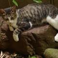 庭石と野良猫 2014.7.23