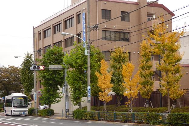 晩秋の街路樹を目前にして…
