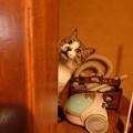 写真: 渦中の猫さん!?