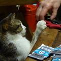 写真: 猫は手を貸したい!?