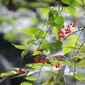 写真: 秋粒の詩